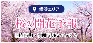 2020年版「横浜お花見屋形船」の為の桜開花予報